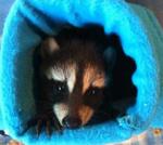 Baby-Raccoon_Igloo