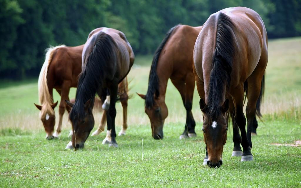 horses-feature