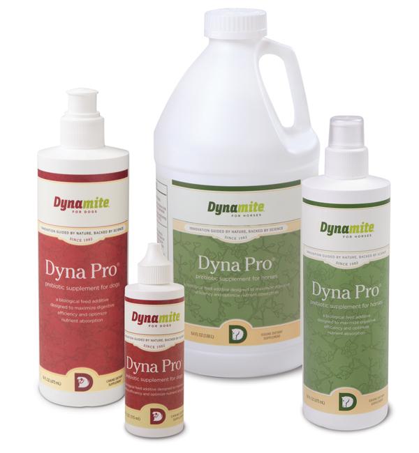 dyna pro quad_XS