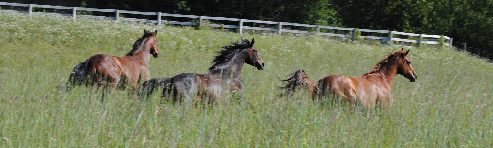 Hollys 3 Horses